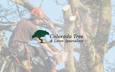 Colorado Tree & Lawn